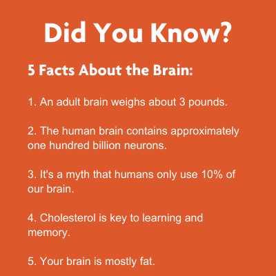 5 facts about our brain